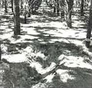 Гробът на една от жертвите на Бърни