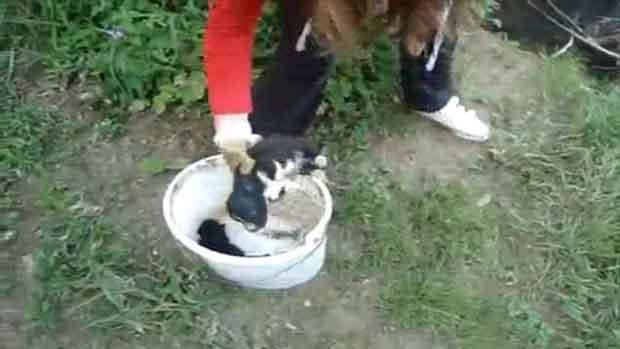 Видео на момиче, което дави кученца, предизвика буря в Интернет