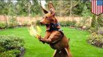Мъж подпали топките на кучето си, за да не плаща за кастрация