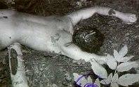 Тялото на убития Вилкин