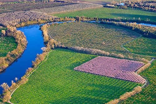 Прасковените овощи в окръг Сътър край река Федър