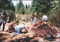 Властите претърсват гората Молала